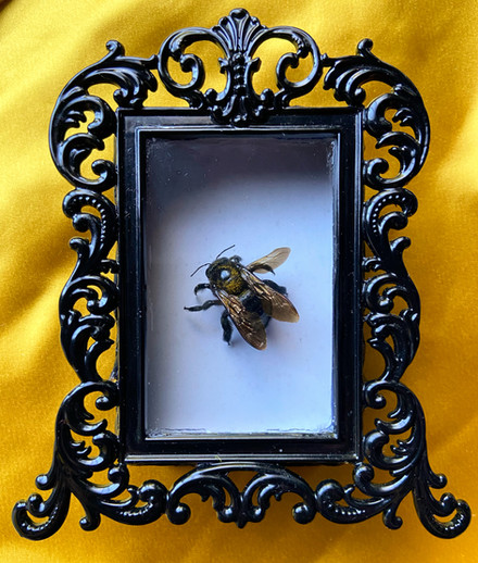 Carpenter Bee Shadow Box - 2020