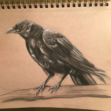 Crow - SOLD