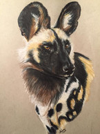 African Wild Dog (Painted Dog) - For Sale
