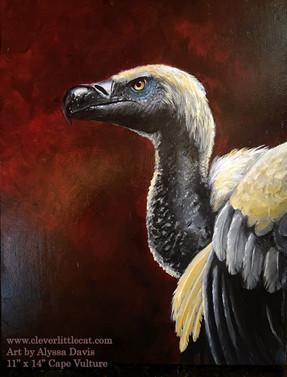 Cape Vulture - For Sale