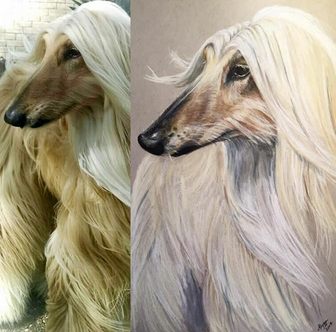 Afghan Hound Portrait - SOLD