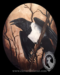 Pied Crow - For Sale