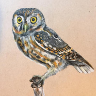Elf Owl 9 x 12