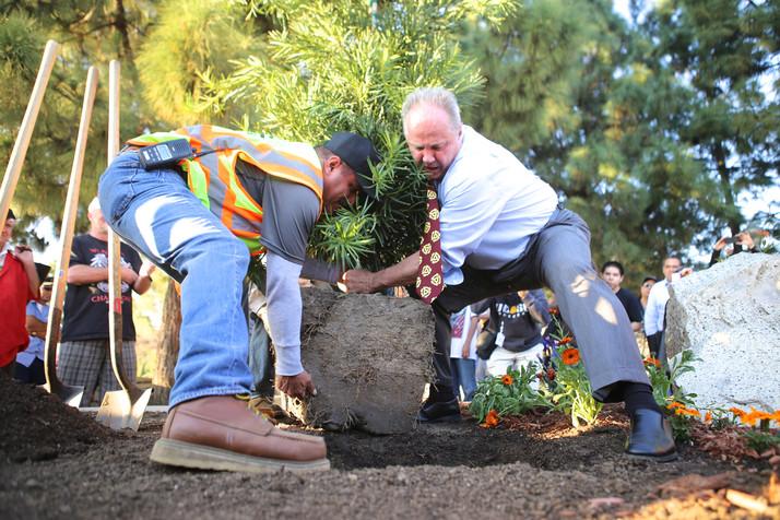 George Harrison Tree Replanting