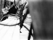 12Black and White Film - Kodak T-MAX P32