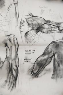 Anatomy Experimentation (2009)