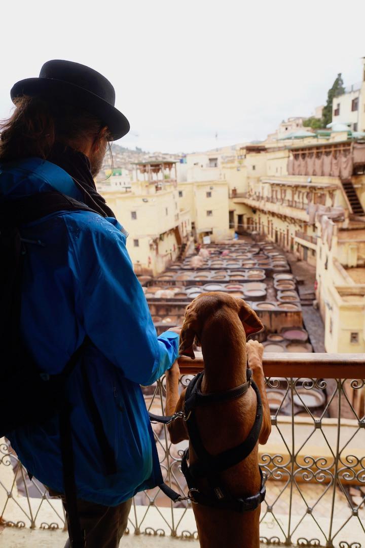 Traveldog Vizsla