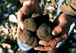 Truffe - Truffles