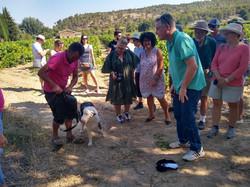 Avec des croisiéristes américains et australiens à la découverte de la truffe