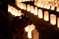 Love Lights - Animal Adoption League
