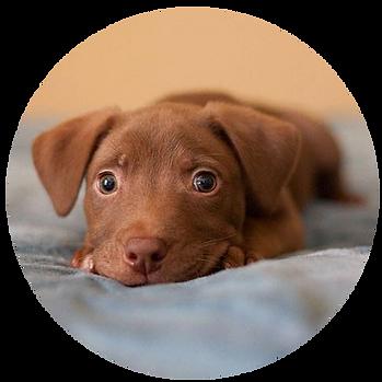 Animal-Adoption-League-Volunteer-sign-up