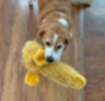 Animal-Adoption-League-Happy-Tails-Puddi