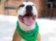 animal-adoption-league-pet-palooza.jpg