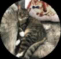 Animal-adoption-league-happy-tails-finle
