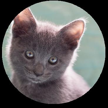 Animal-Adoption-League-Foster-sign-up.pn