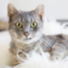 animal-adoption-league-cat-adoption.jpg