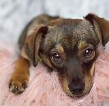 animal-adoption-league-dog-adoption-1.jp