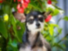 Mimi_Animal Adoption League.jpeg