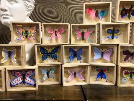 小学生クラス.新種蝶標本