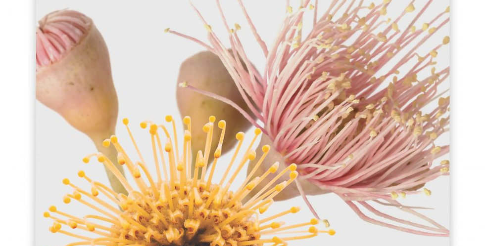 Splosh - Flourish Bloom Ceramic Coaster