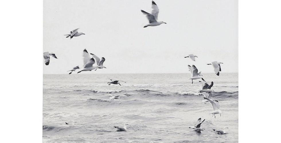Splosh -Coastal Seagulls Ceramic Coaster