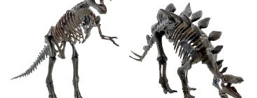 Keycraft - Magnoidz 3D Dinosaur Skeletons