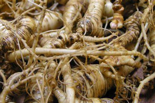Organic Dong Quai