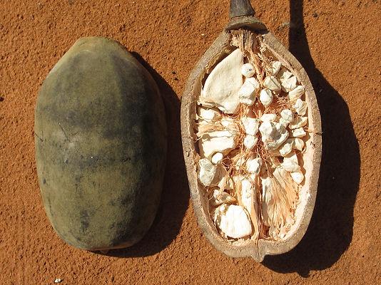 baobab 1.jpg