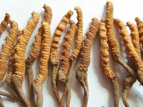 Organic Cordyceps Vegan Capsules