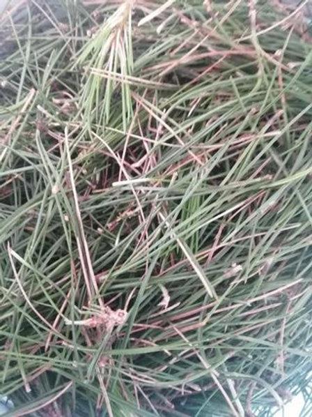 Organic Pine Needle Tea