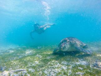 Turtles (1 of 2).jpg
