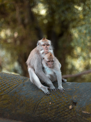 Monkey Forest 2 (1 of 1).jpg