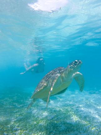 Turtles (2 of 2).jpg