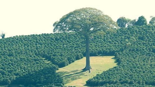 Brazil Serra Negra