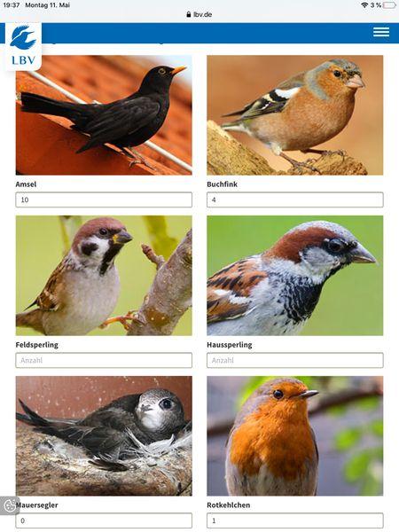 gartenvögel (2)