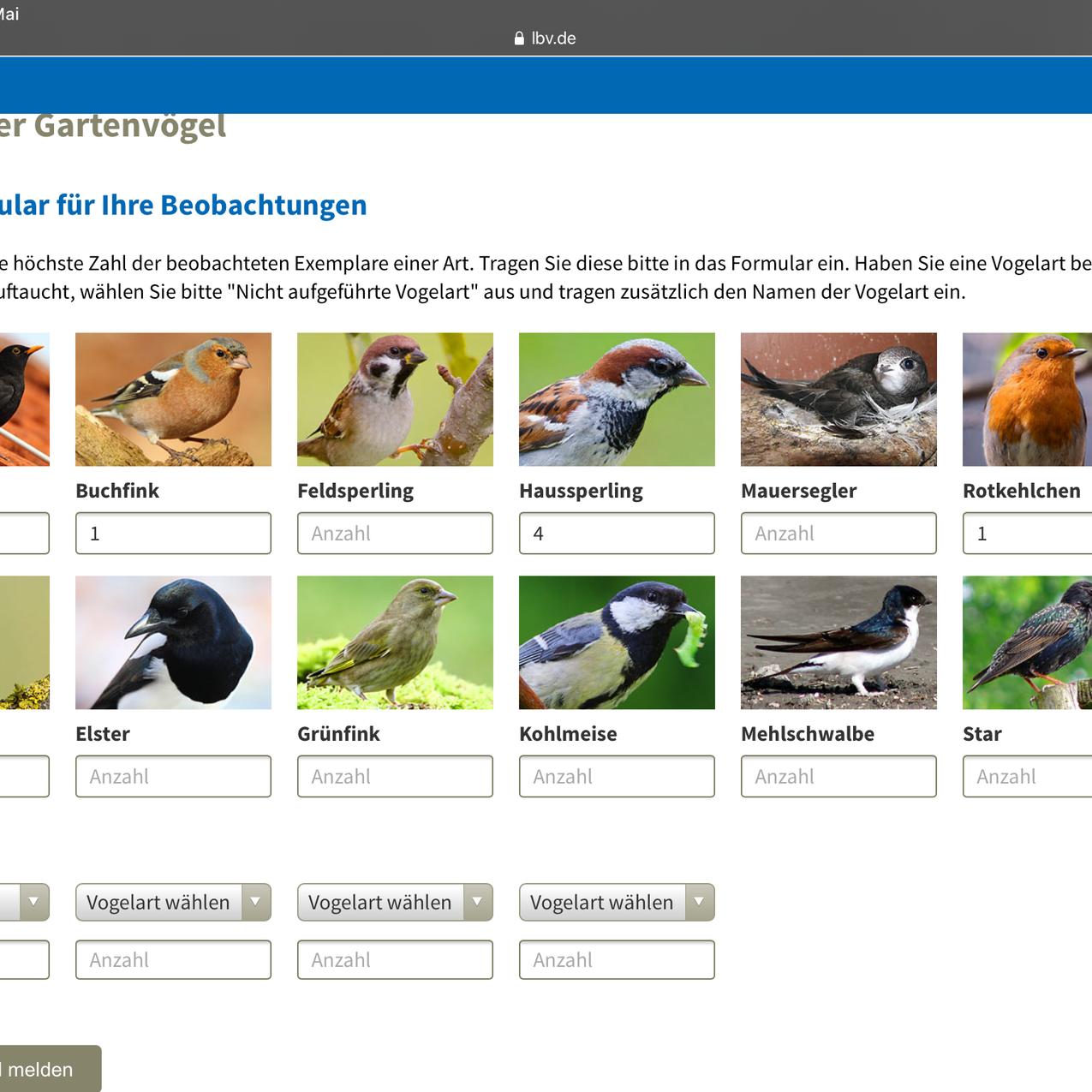 gartenvögel (1)
