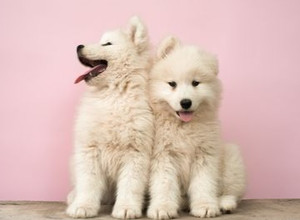 Toilet Training For Dogs