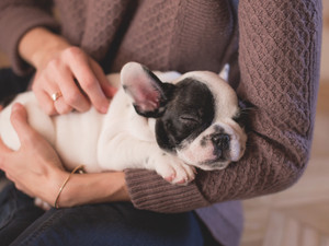 Puppy Management: Tips To Remember If You Bought A Puppy