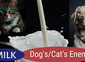 Milk -  Dog and Cat's Enemy