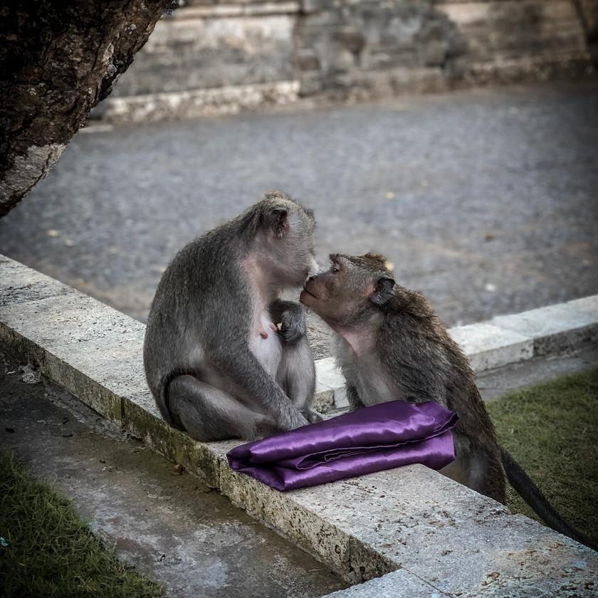 Monkeys at Uluwatu Temple   On Airplane Mode
