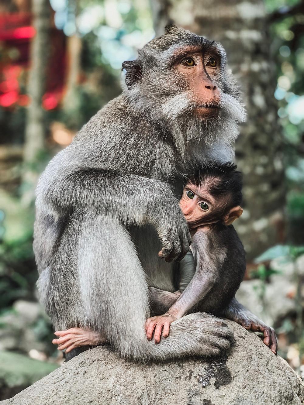 Monkey Sanctuary in Ubud, Bali | On Airplane Mode