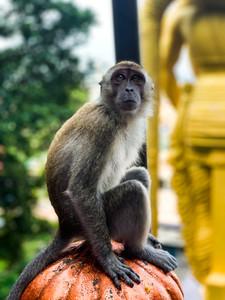 Batu Caves Monkey in Malaysia | On Airplane Mode