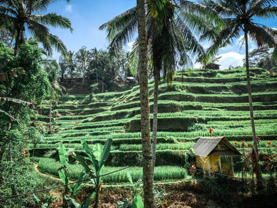 Tegalalang Rice Fields in Ubud, Bali | On Airplane Mode