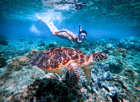 Swimming With Turtles | Apo Island