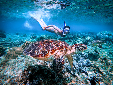 Swimming With Turtles | Apo Island