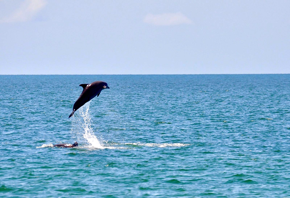 Honest Eco Dolphin Watching Tour | On Airplane Mode