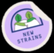 NEWSTRAINS-03.png