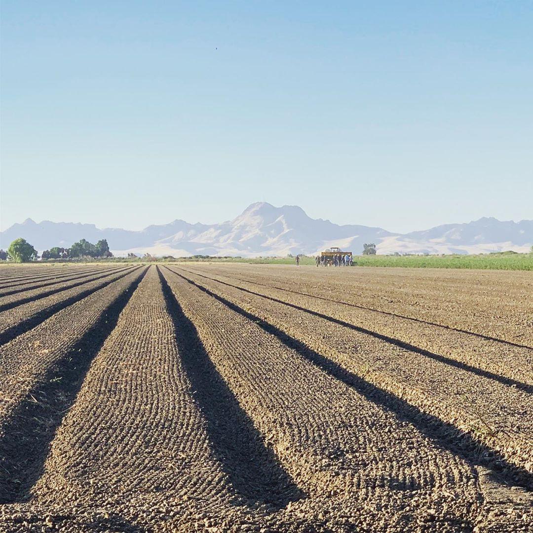 Empty Field.jpg