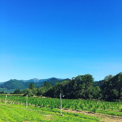 farm with mountains.jpg