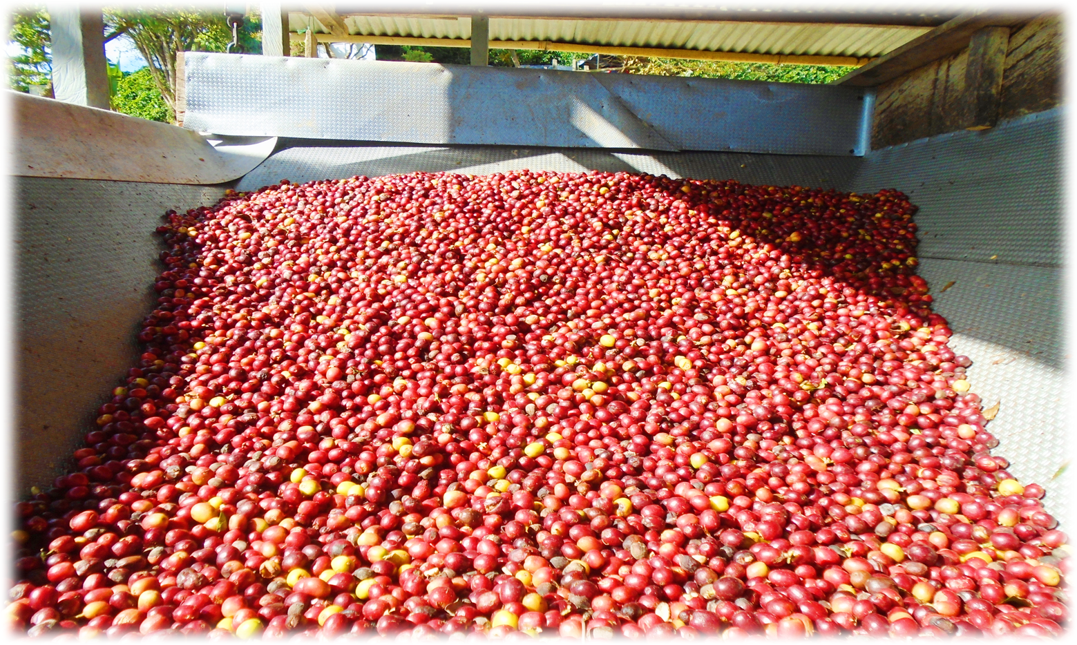before pulping